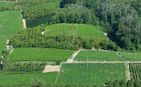 Passatore - Azienda Agricola Mustela